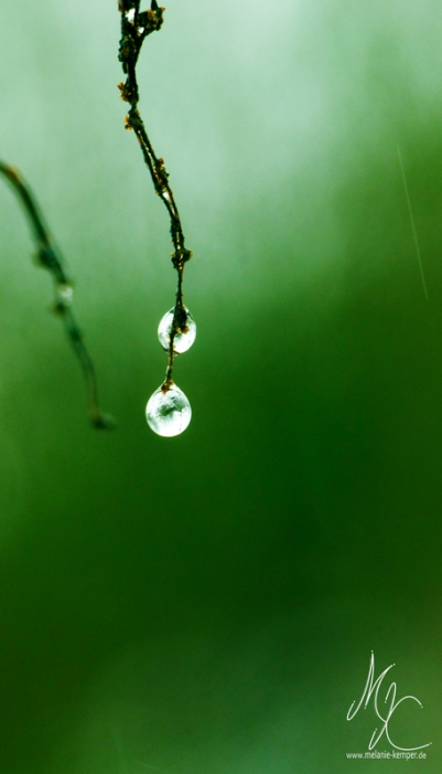Drops-of-Green_01a
